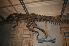 """Natural History Museum London • <a style=""""font-size:0.8em;"""" href=""""http://www.flickr.com/photos/160223425@N04/38894588301/"""" target=""""_blank"""">View on Flickr</a>"""