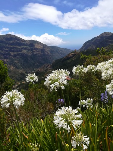 """Madeira Levada hike • <a style=""""font-size:0.8em;"""" href=""""http://www.flickr.com/photos/160223425@N04/38836452021/"""" target=""""_blank"""">View on Flickr</a>"""