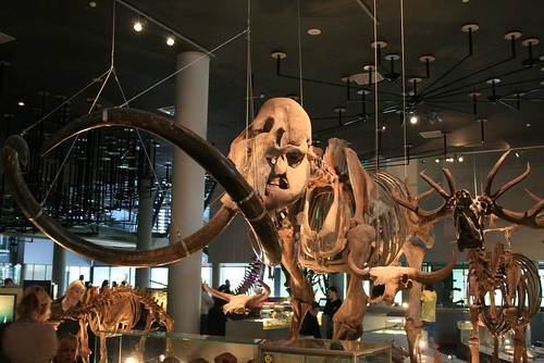 """Naturalis Leiden • <a style=""""font-size:0.8em;"""" href=""""http://www.flickr.com/photos/160223425@N04/25085584748/"""" target=""""_blank"""">View on Flickr</a>"""