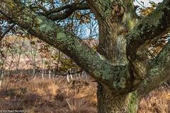 Autumn in Whitmoor-6498