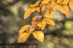 Late Leaves