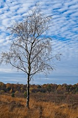 Autumnal Whitmoor Common-DSCF6495