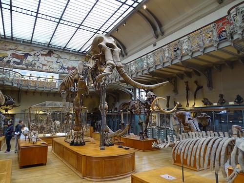 """Galerie de Paléontologie et d'Anatomie comparée Paris • <a style=""""font-size:0.8em;"""" href=""""http://www.flickr.com/photos/160223425@N04/27081149169/"""" target=""""_blank"""">View on Flickr</a>"""