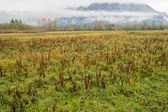 Mt Si Fields