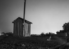 Ghost Dog on the Farm