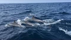Delfinbesichtigung