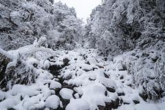 雪見晴|太平山
