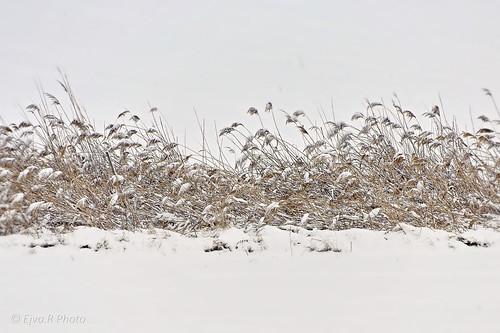 Tél Hó Nád