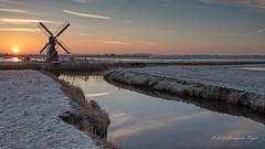 De kemphaan Texel