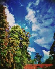 Taman Botanikal, Ayer Keroh - Melaka - http://4sq.com/s1fAIm #green #nature #tree #sky #travel #holiday #holidayMalaysia #travelMalaysia #Asian #Malaysia #Malacca #大自然 #天空 #树木 #旅行 #度假 #马来西亚旅行 #马来西亚度假 #亚洲 #马来西亚 #发现马来西亚 #发现大马 #自游马来西亚 #马六甲