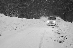 In the snowy old road._A9_7983