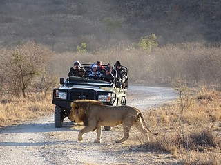 Madikwe, North West Province, South Africa
