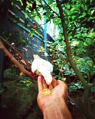 #zoo #travel #holiday #green #Asian #Malaysia #Selangor #Serikambangan #travelMalaysia #holidayMalaysia #动物园 #旅行 #度假 #绿色 #亚洲 #马来西亚 #雪兰莪 #马来西亚度假