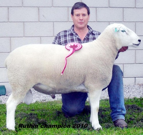 10 Graham Fort  with champion ram Ruthin 2010