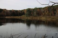 Coastal Plain Marsh