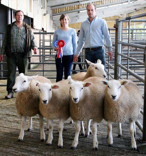 2017 1st prize gimmer lambs at Skipton society sale
