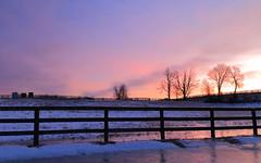 Horse farm at dawn