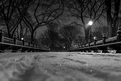 Snow fall on the Mall. Central Park, NYC.