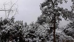 ☃️ Enfarinada #neu #nevada #Tiana