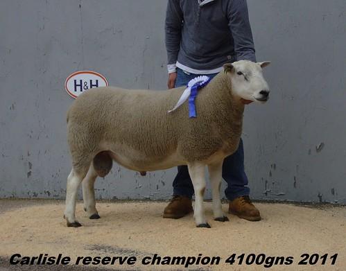 7..Carlisle reserve champion 4100 gns 2011-CARL