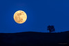 """Moonrise over Morgan Hill • <a style=""""font-size:0.8em;"""" href=""""http://www.flickr.com/photos/53554456@N05/39114495985/"""" target=""""_blank"""">View on Flickr</a>"""