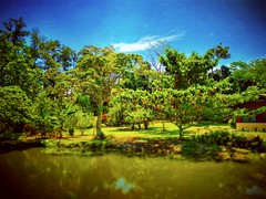 Lenggeng, Negeri Sembilan https://goo.gl/maps/dro4ZHoXSJF2 #Lake #trip #travel #holiday #traveling #tree #Asian #Malaysia #negerisembilan #holidayMalaysia #travelMalaysia #nature #大自然 #湖 #旅行 #度假 #亚洲 #马来西亚 #森美兰 #马来西亚度假 #马来西亚旅行 #Lenggeng #蓝天 #bluesky #green
