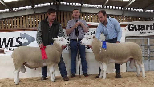 Graham and Terry with 1st champion and 2nd prize at Welshpool society sale