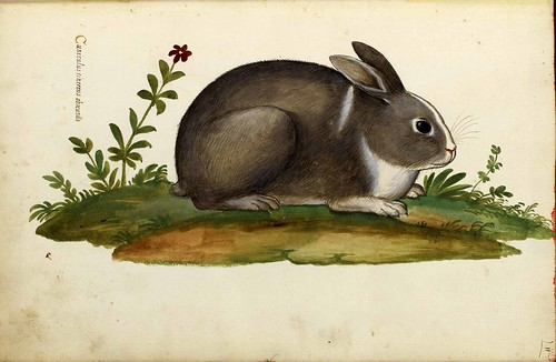 """Animal-Woodland-Rabbit-Italian-1 • <a style=""""font-size:0.8em;"""" href=""""http://www.flickr.com/photos/15706268@N04/40773391642/"""" target=""""_blank"""">View on Flickr</a>"""