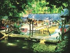 Jalan Taman Zooview, Kampung Kemensah, 68000 Ampang, Selangor https://goo.gl/maps/zDaQMnLURRn  #tree #nature #travel #holiday #trip #Asian #Malaysia #Selangor #ampang #travelMalaysia #holidayMalaysia #树木 #旅行 #度假 #亚洲 #马来西亚 #雪兰莪 #安邦 #马来西亚旅行 #马来西亚度假 #kampung
