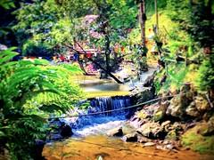 Jalan Taman Zooview, Kampung Kemensah, 68000 Ampang, Selangor https://goo.gl/maps/eDNnEWqJcYy  #tree #nature #travel #holiday #trip #Asian #Malaysia #Selangor #ampang #travelMalaysia #holidayMalaysia #树木 #旅行 #度假 #亚洲 #马来西亚 #雪兰莪 #安邦 #马来西亚旅行 #马来西亚度假 #kampung