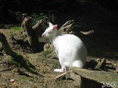 IMG_2569_Burgers_Zoo