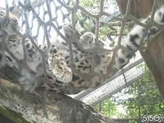 IMG_2679_Burgers_Zoo