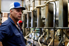 Stewart looks to make sure all of the cows are gone before bringing in a new round of cows to milk. Stewart and Champion milk 136 cows twice a day.