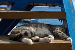 Кот на отдыхе) Cat on vacation)