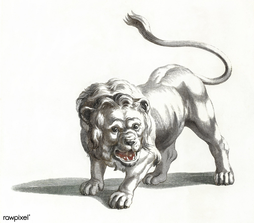 The World S Best Photos Of Drawing And Lion