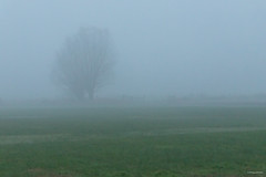 Misty Morning / Koksijde