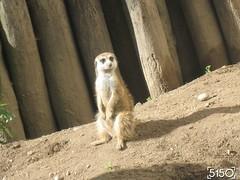 IMG_2498_Burgers_Zoo