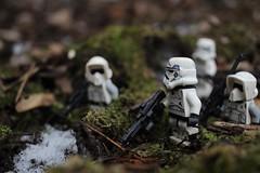 Scout forces