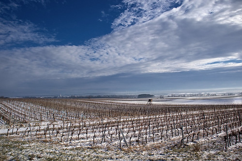 Vineyard Landscape Winter /Táj Tél