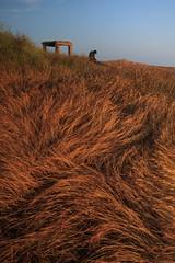 sitting under the wind