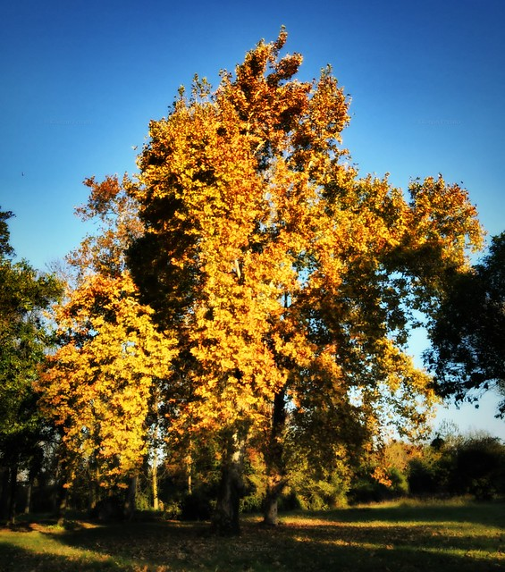 Autumn explosion