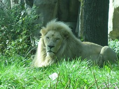IMG_2696_Burgers_Zoo