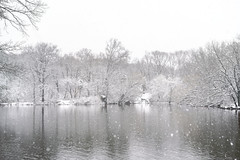 Snowstorm over the Central Park Lake, New York, New York