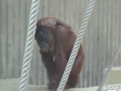 IMG_2636_Burgers_Zoo