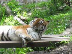 IMG_2648_Burgers_Zoo