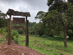 Harenna Bamboo @ The Sanetti Plateau