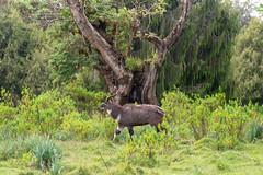 Bale Mountains National Park (BMNP)