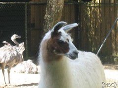 IMG_2545_Burgers_Zoo