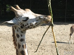IMG_2706_Burgers_Zoo