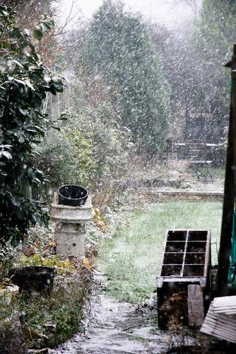 Blizzard conditions in the garden